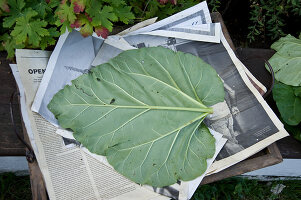 Bildno.: 11018788<br/><b>Feature: 11018783 - Rhubarb to Go</b><br/>Home-made garden stepping stones made from rhubarb leaves<br />living4media / Casper-Zielonka, Susanne