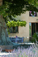 Bildno.: 11136462<br/><b>Feature: 11136451 - Bastide La Garance</b><br/>B &amp; B in beautiful Provence<br />living4media / Madamour, Christophe