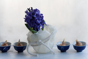 Bildno.: 11144884<br/><b>Feature: 11144875 - Hyacinths for Easter</b><br/>Blue, pink or white – hyacinths bring scent and sensibility to every table<br />living4media / Schindler, Martina