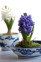 Bildno.: 11144886<br/><b>Feature: 11144875 - Hyacinths for Easter</b><br/>Blue, pink or white – hyacinths bring scent and sensibility to every table<br />living4media / Schindler, Martina