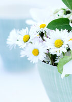 Bildno.: 11146876<br/><b>Feature: 11146866 - Daisies are Forever</b><br/>The common lawn daisy alone and combined with other flowers<br />living4media / Bauer, Christine