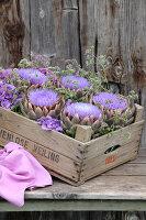 Bildnr.: 11195024<br/><b>Feature: 11194991 - Deko in Aubergine</b><br/>Was der Bauerngarten an Deko hergibt<br />living4media / Raider, Peter