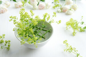 Bildno.: 11197312<br/><b>Feature: 11197304 - Roses and Lady's Mantle</b><br/>Delicate floral decoration<br />living4media / Schindler, Martina