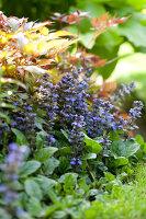 Bildno.: 11223700<br/><b>Feature: 11223659 - Green and Grand</b><br/>Romantic garden in Limburg, Belgium<br />living4media / Pietrek, Sibylle