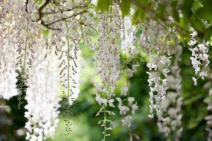 Bildno.: 11223702<br/><b>Feature: 11223659 - Green and Grand</b><br/>Romantic garden in Limburg, Belgium<br />living4media / Pietrek, Sibylle