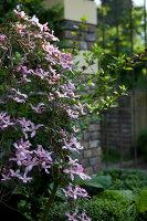 Bildnr.: 11223718<br/><b>Feature: 11223710 - Formvollendet</b><br/>Heerenhof, ein idyllischer Garten in Maastricht<br />living4media / Pietrek, Sibylle