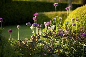 Bildnr.: 11223728<br/><b>Feature: 11223710 - Formvollendet</b><br/>Heerenhof, ein idyllischer Garten in Maastricht<br />living4media / Pietrek, Sibylle