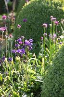 Bildnr.: 11223744<br/><b>Feature: 11223710 - Formvollendet</b><br/>Heerenhof, ein idyllischer Garten in Maastricht<br />living4media / Pietrek, Sibylle