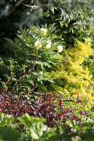 Bildnr.: 11223746<br/><b>Feature: 11223710 - Formvollendet</b><br/>Heerenhof, ein idyllischer Garten in Maastricht<br />living4media / Pietrek, Sibylle