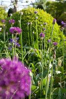 Bildnr.: 11223756<br/><b>Feature: 11223710 - Formvollendet</b><br/>Heerenhof, ein idyllischer Garten in Maastricht<br />living4media / Pietrek, Sibylle