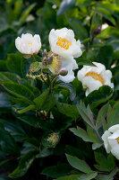 Bildnr.: 11223764<br/><b>Feature: 11223710 - Formvollendet</b><br/>Heerenhof, ein idyllischer Garten in Maastricht<br />living4media / Pietrek, Sibylle
