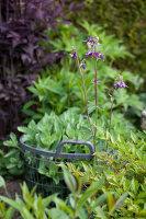 Bildno.: 11223864<br/><b>Feature: 11223835 - Woman's Touch</b><br/>Lush garden in the Netherlands<br />living4media / Pietrek, Sibylle