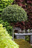 Bildno.: 11223868<br/><b>Feature: 11223835 - Woman's Touch</b><br/>Lush garden in the Netherlands<br />living4media / Pietrek, Sibylle
