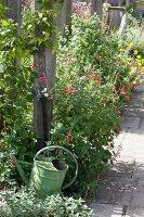 Bildno.: 11247186<br/><b>Feature: 11247147 - A Garden with Tradition</b><br/>Extensive garden surrounding a 16th century house<br />living4media / Herwig, Modeste