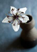 Bildnr.: 11254594<br/><b>Feature: 11254582 - Vintage Flower</b><br/>Die Jungfer im Gr&#252;nen klingt altmodisch, ist aber top angesagt<br />living4media / Bauer, Christine