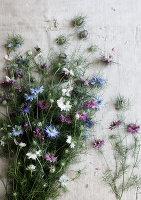 Bildnr.: 11254602<br/><b>Feature: 11254582 - Vintage Flower</b><br/>Die Jungfer im Gr&#252;nen klingt altmodisch, ist aber top angesagt<br />living4media / Bauer, Christine