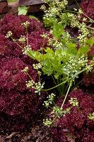 Bildno.: 11263434<br/><b>Feature: 11263422 - Garden Dreams</b><br/>Romantic garden near Cologne<br />living4media / Bauer, Christine