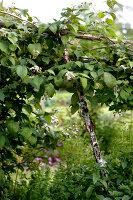 Bildno.: 11263436<br/><b>Feature: 11263422 - Garden Dreams</b><br/>Romantic garden near Cologne<br />living4media / Bauer, Christine