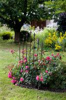Bildno.: 11263444<br/><b>Feature: 11263422 - Garden Dreams</b><br/>Romantic garden near Cologne<br />living4media / Bauer, Christine