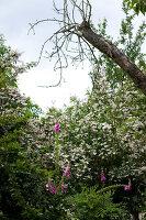 Bildno.: 11263450<br/><b>Feature: 11263422 - Garden Dreams</b><br/>Romantic garden near Cologne<br />living4media / Bauer, Christine