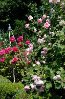 Bildno.: 11263990<br/><b>Feature: 11263941 - Rich in Roses</b><br/>Italian rose garden is a treasure trove of fragrent old fashioned roses<br />living4media / Kompatscher, Anneliese