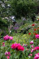 Bildno.: 11264020<br/><b>Feature: 11263941 - Rich in Roses</b><br/>Italian rose garden is a treasure trove of fragrent old fashioned roses<br />living4media / Kompatscher, Anneliese