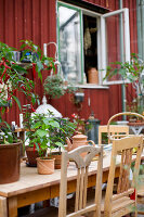Bildno.: 11264900<br/><b>Feature: 11264822 - Pia&#39;s Orangery</b><br/>This conservatory in Sweden is a whole new world of plants<br />living4media / M&#246;ller, Cecilia