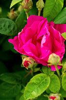 Bildno.: 11271964<br/><b>Feature: 11271958 - Swedish Garden</b><br/>Garden in Lynga<br />living4media / M&#246;ller, Cecilia