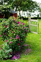 Bildno.: 11271966<br/><b>Feature: 11271958 - Swedish Garden</b><br/>Garden in Lynga<br />living4media / M&#246;ller, Cecilia