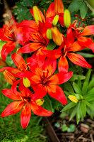 Bildno.: 11271974<br/><b>Feature: 11271958 - Swedish Garden</b><br/>Garden in Lynga<br />living4media / M&#246;ller, Cecilia