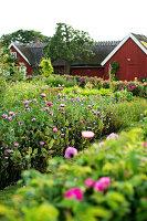 Bildno.: 11271976<br/><b>Feature: 11271958 - Swedish Garden</b><br/>Garden in Lynga<br />living4media / M&#246;ller, Cecilia