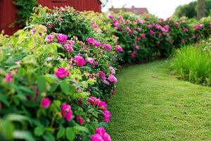 Bildno.: 11271984<br/><b>Feature: 11271958 - Swedish Garden</b><br/>Garden in Lynga<br />living4media / M&#246;ller, Cecilia