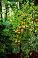 Bildno.: 11272000<br/><b>Feature: 11271958 - Swedish Garden</b><br/>Garden in Lynga<br />living4media / M&#246;ller, Cecilia