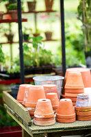 Bildno.: 11272004<br/><b>Feature: 11271958 - Swedish Garden</b><br/>Garden in Lynga<br />living4media / M&#246;ller, Cecilia