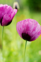 Bildno.: 11272014<br/><b>Feature: 11271958 - Swedish Garden</b><br/>Garden in Lynga<br />living4media / M&#246;ller, Cecilia