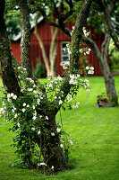 Bildno.: 11272020<br/><b>Feature: 11271958 - Swedish Garden</b><br/>Garden in Lynga<br />living4media / M&#246;ller, Cecilia