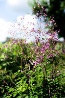 Bildno.: 11272032<br/><b>Feature: 11271958 - Swedish Garden</b><br/>Garden in Lynga<br />living4media / M&#246;ller, Cecilia