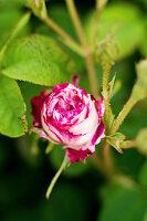 Bildno.: 11272038<br/><b>Feature: 11271958 - Swedish Garden</b><br/>Garden in Lynga<br />living4media / M&#246;ller, Cecilia