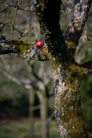 Bildnr.: 11303644<br/><b>Feature: 11303626 - Farbpalette der Natur</b><br/>Ostereier mit Naturprodukten f&#228;rben<br />living4media / L&#246;scher, Sabine