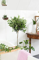 Bildno.: 11304486<br/><b>Feature: 11304464 - Blooming Bath</b><br/>Flowers in the bathroom add charm and flourish in the warm damp atmosphere<br />living4media / M&#246;ller, Cecilia