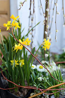 Bildno.: 11304646<br/><b>Feature: 11304632 - Spring at Last</b><br/>Spring bulbs and youthful gardeners define the season<br />living4media / M&#246;ller, Cecilia