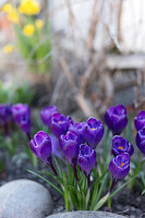 Bildno.: 11304654<br/><b>Feature: 11304632 - Spring at Last</b><br/>Spring bulbs and youthful gardeners define the season<br />living4media / M&#246;ller, Cecilia