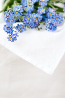 Bildno.: 11326214<br/><b>Feature: 11326207 - Forget-Me-Not</b><br/>Create your own beautiful arrangements using forget-me-nots<br />living4media / Weber, Cornelia