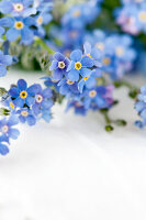 Bildno.: 11326218<br/><b>Feature: 11326207 - Forget-Me-Not</b><br/>Create your own beautiful arrangements using forget-me-nots<br />living4media / Weber, Cornelia