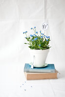 Bildno.: 11326222<br/><b>Feature: 11326207 - Forget-Me-Not</b><br/>Create your own beautiful arrangements using forget-me-nots<br />living4media / Weber, Cornelia