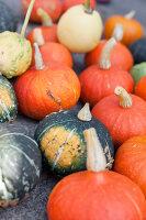 Bildno.: 11345898<br/><b>Feature: 11345897 - Pumpkin Party</b><br/>Pumpkins and Jack-o&#39;-Lanterns<br />living4media / Klazinga, Jansje
