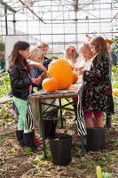 Bildno.: 11345924<br/><b>Feature: 11345897 - Pumpkin Party</b><br/>Pumpkins and Jack-o&#39;-Lanterns<br />living4media / Klazinga, Jansje