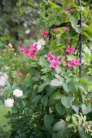Bildno.: 11346636<br/><b>Feature: 11346627 - The Sculpture Garden</b><br/>Romantic garden in the Saurland, Germany<br />living4media / Pietrek, Sibylle