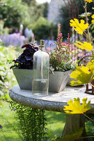 Bildno.: 11346662<br/><b>Feature: 11346627 - The Sculpture Garden</b><br/>Romantic garden in the Saurland, Germany<br />living4media / Pietrek, Sibylle
