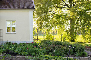 Bildno.: 11349302<br/><b>Feature: 11349267 - Swedish Spring</b><br/>A lush garden in Sweden<br />living4media / M&#246;ller, Cecilia